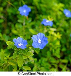 bleu, fleurs ressort, forêt, fleurir