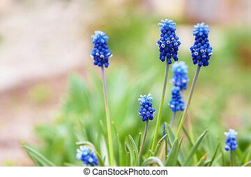 bleu, fleurs ressort