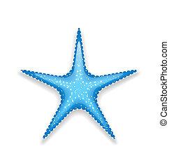 bleu, fond blanc, isolé, etoile mer