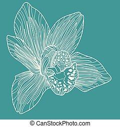 bleu, fond blanc, orchidée