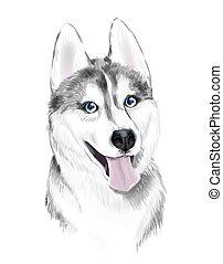 bleu, gris, sibirsky, chien, sibérien, dog., figure, adulte, husky, blanc, yeux, ou