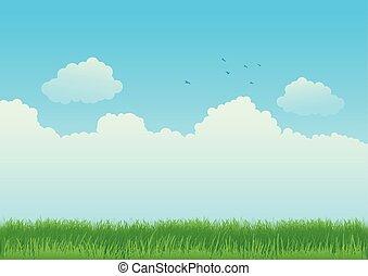 bleu, herbe champ, ciel, vert