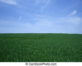 bleu, herbe, ciel vert, fond