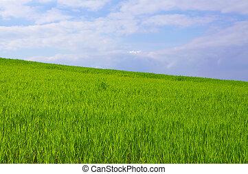 bleu, herbe, ciel vert