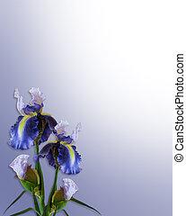 bleu, iris, ou, gabarit, invitation