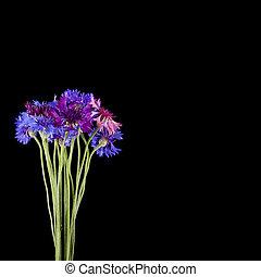 bleu, isolé, close-up., arrière-plan noir, cornflowers, bouquet