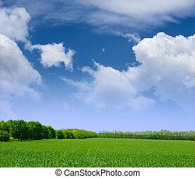 bleu, large, nuages, ciel, herbe, champ, forêt verte