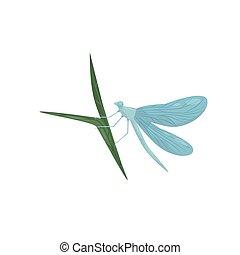 bleu, libellule, paires, leaf., séance, voler, corps, deux, long, wings., insecte, vecteur, vert, plat, icône