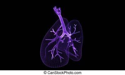bleu, lungs., animé, poumons, degré, point, lumière, espace, seamless, virtuel, tourner, faire boucle, incandescent, neurons, model., humain, particules, mouvement, 360, 3d