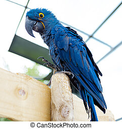 bleu, macaw, blue., grand, grand, clair, parrot., oiseau