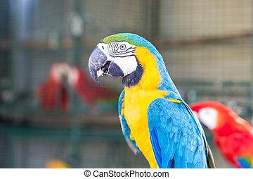 bleu, macaw, or