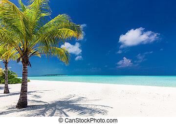 bleu, négligence, deux, arbres, paume, lagune, plage blanche