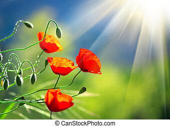 bleu, nature, printemps, sur, fleurir, champ ciel, arrière-plan., coquelicots, pavot, fleurs