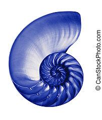 bleu, nautilus3