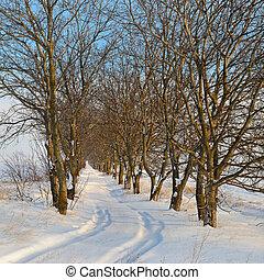 bleu, neige-couvert, ciel, neige, arbres, champ, fond