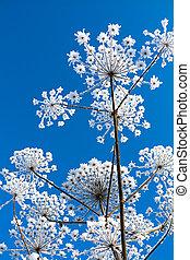 bleu, neigeux, résumé, ciel, arrière-plan., fleurs