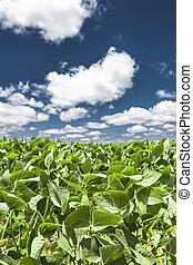 bleu, nuages, feuilles, ciel, vert, coton