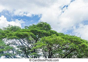 bleu, nuages, sommet arbre, ciel, vert, ligne, sur