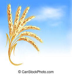 bleu, oreilles, devant, vecteur, blé, illustration., sky.