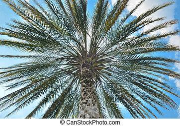bleu, palmier, ciel