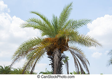 bleu, palmier, sky.