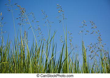 bleu, panorama, herbe, sky.