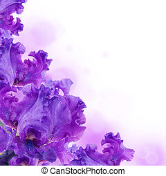 bleu, papillon, été, iris, contre, herbe, vert