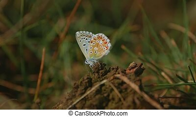 bleu, papillon, détail, green-underside, dalmatie