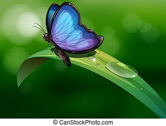 bleu, papillon, feuille, au-dessus