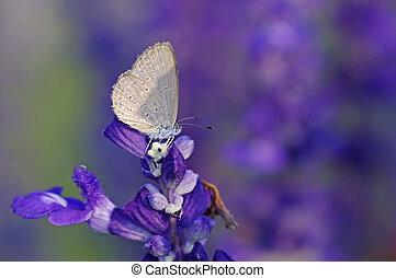 bleu, papillon, ligne