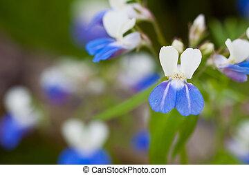 bleu, petites taches