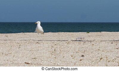 bleu, plage, stands, sky., promenades, fond, mer, vagues, mouette, plage