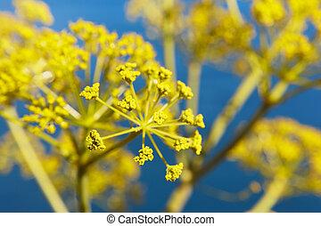 bleu, plante, détail, fond jaune, espagne