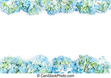 bleu, plat, fleur, cadre, sommet, arrière-plan., fond blanc, floral, hortensia, vue., fleurs, frontière, poser