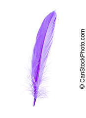 bleu, plume