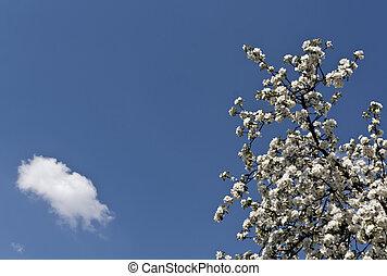 bleu, pomme, sky., fleur, arbre, contre