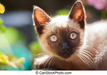 bleu, portrait, yeux, chat