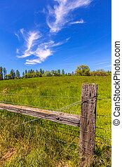 bleu, pré, printemps, ranch, ciel, californie, jour
