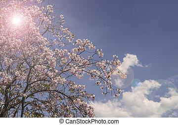 bleu, printemps, arbre, contre, fleurs, ciel