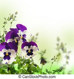 bleu, printemps, arrière-plan vert, violettes