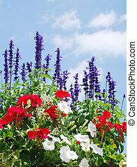bleu, printemps, ciel, contre, fleurissant, fleurs