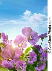 bleu, printemps, ciel, contre, fleurs violettes