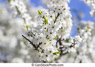 bleu, printemps, ciel, fleurs, contre