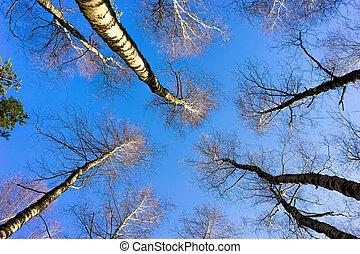 bleu, printemps, ciel, forêt