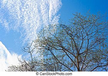 bleu, printemps, feuilles, arbre, contre, ciel