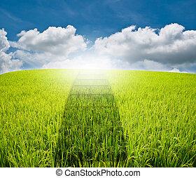bleu, promenade, manière, ciel, herbe