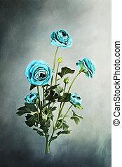 bleu, ranunculus