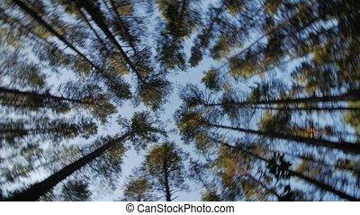 bleu, regard, arbres, ciel, haut, par, tourner, bois, vert, rêver, grand