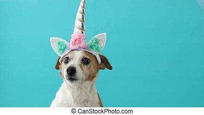 bleu, rigolote, peu, chien, fond, licorne, blanc