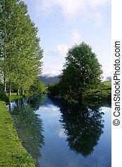 bleu, rivière, reflet, dans, a, forêt